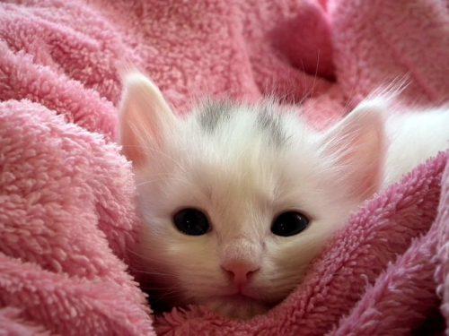 4 idées cadeaux pour l'arrivée de votre chaton