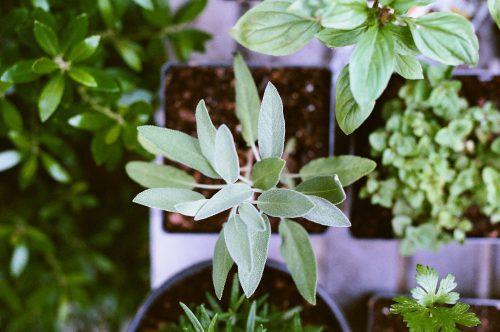 Des plantes aromatiques dans des pots vues d'en haut