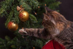 5 idées cadeaux pour mon animal de compagnie